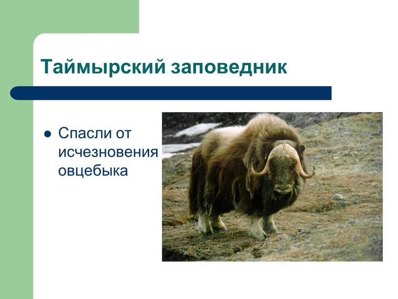 Таймырский заповедник Спасли от исчезновения овцебыка