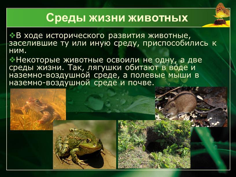 Среды жизни животных В ходе исторического развития животные, заселившие ту или иную среду, приспособились к ним