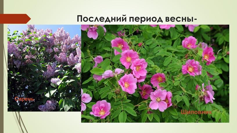 Последний период весны- предлетье