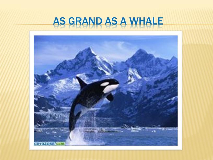 as grand as a whale