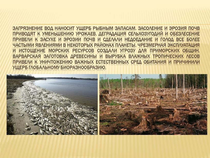 Загрязнение вод наносит ущерб рыбным запасам