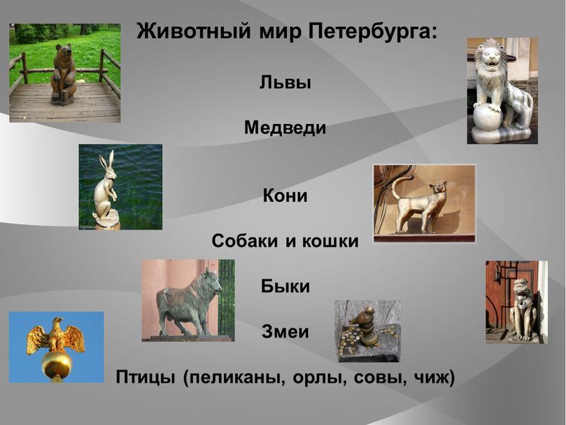Животный мир Петербурга: Львы Медведи