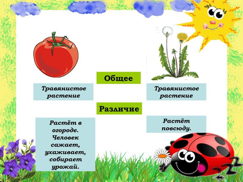 Общее Различие Травянистое растение