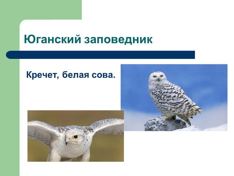 Юганский заповедник Кречет, белая сова