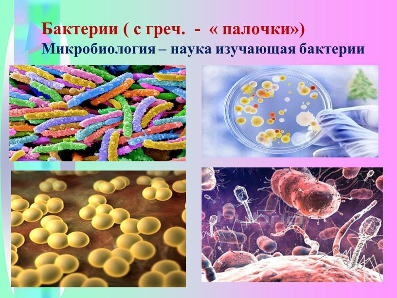 Бактерии ( с греч. - « палочки»)