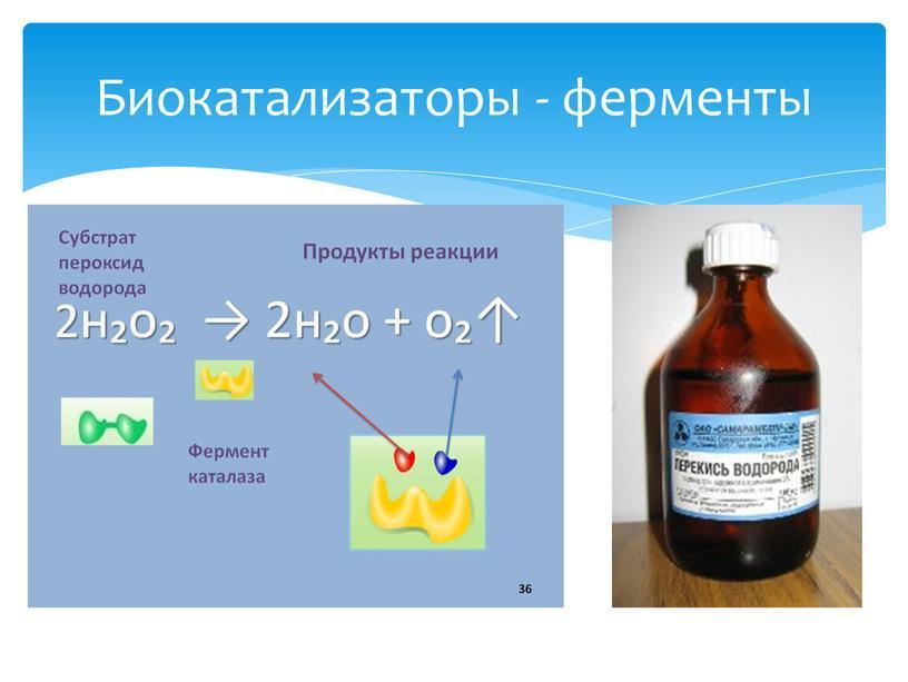 Биокатализаторы - ферменты