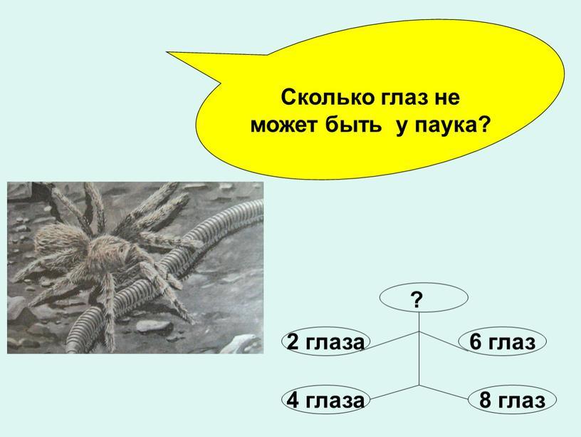 Сколько глаз не может быть у паука? ?