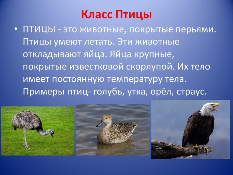 Класс Птицы ПТИЦЫ - это животные, покрытые перьями