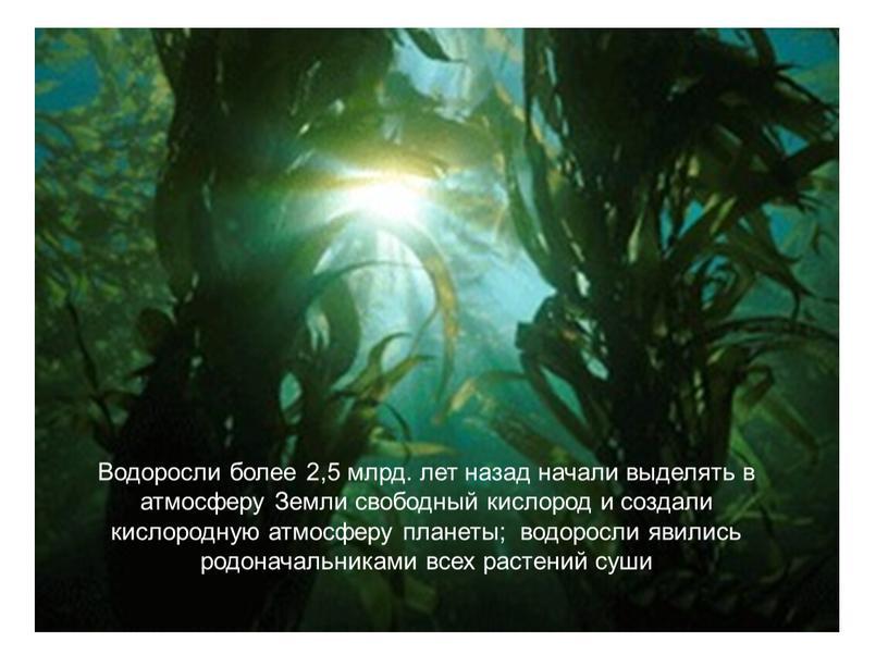 Водоросли более 2,5 млрд. лет назад начали выделять в атмосферу