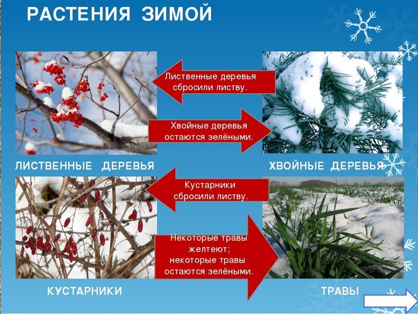 """Презентация к открытому уроку """"Путешествие в зимний лес"""""""