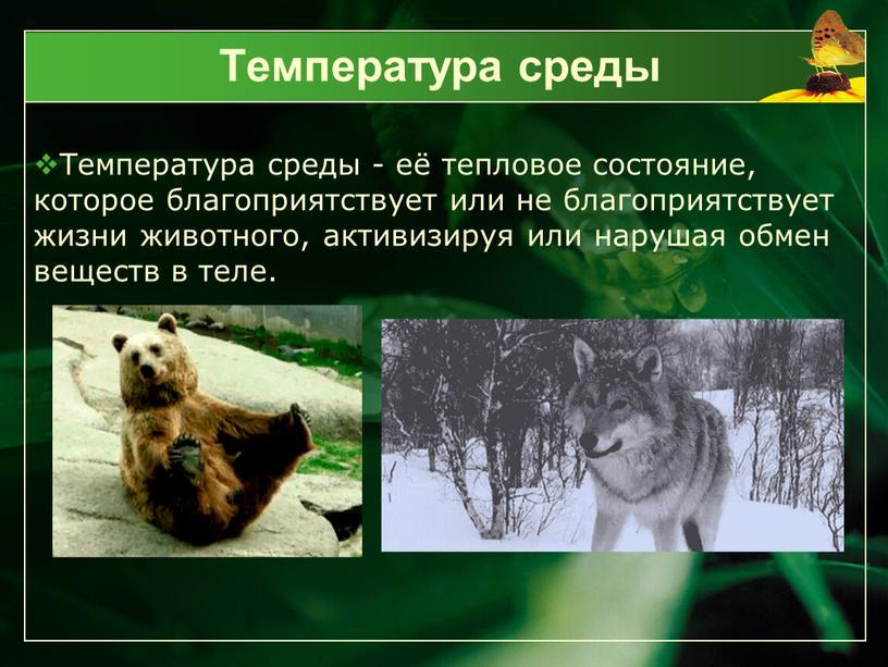 Температура среды Температура среды - её тепловое состояние, которое благоприятствует или не благоприятствует жизни животного, активизируя или нарушая обмен веществ в теле