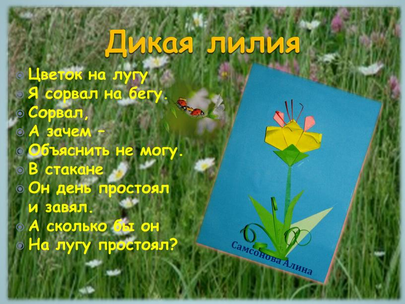 Дикая лилия Цветок на лугу Я сорвал на бегу