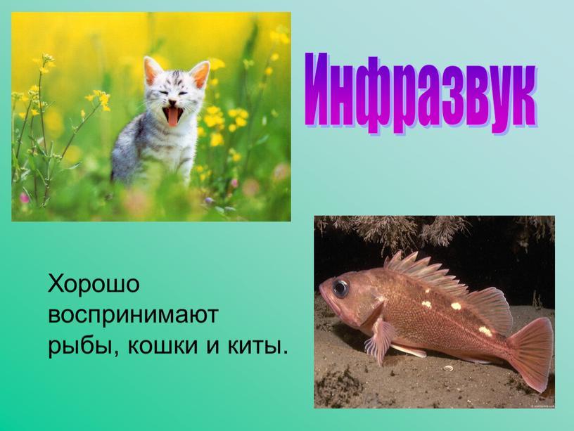 Хорошо воспринимают рыбы, кошки и киты