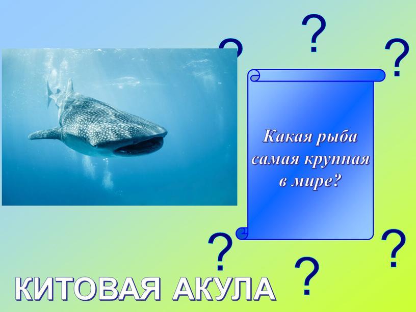Какая рыба самая крупная в мире?