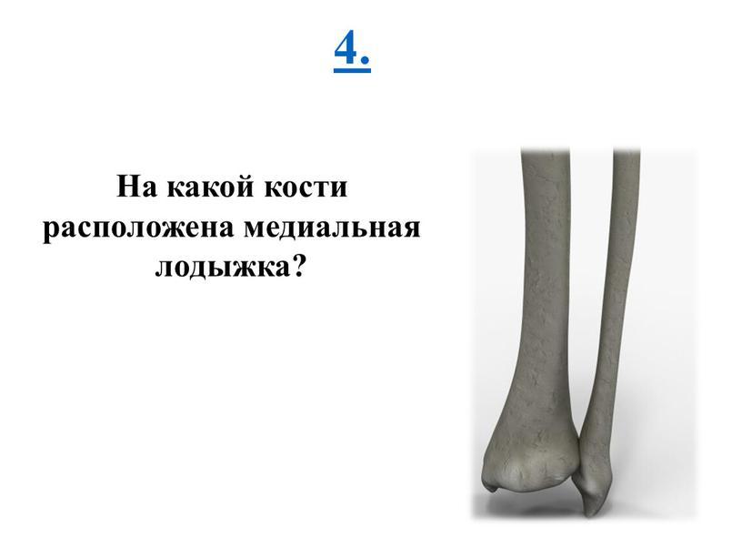 На какой кости расположена медиальная лодыжка?