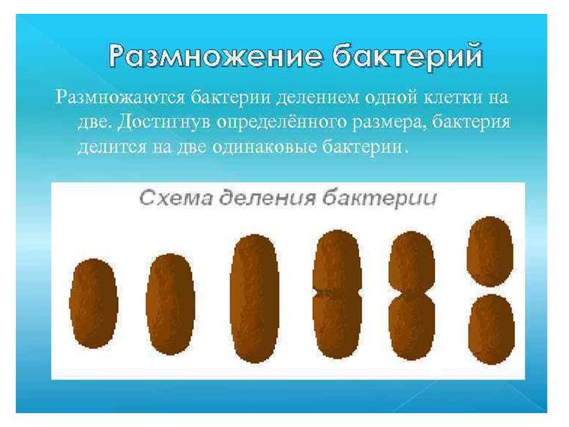"Презентация Учебного проекта ""Бактерии"""