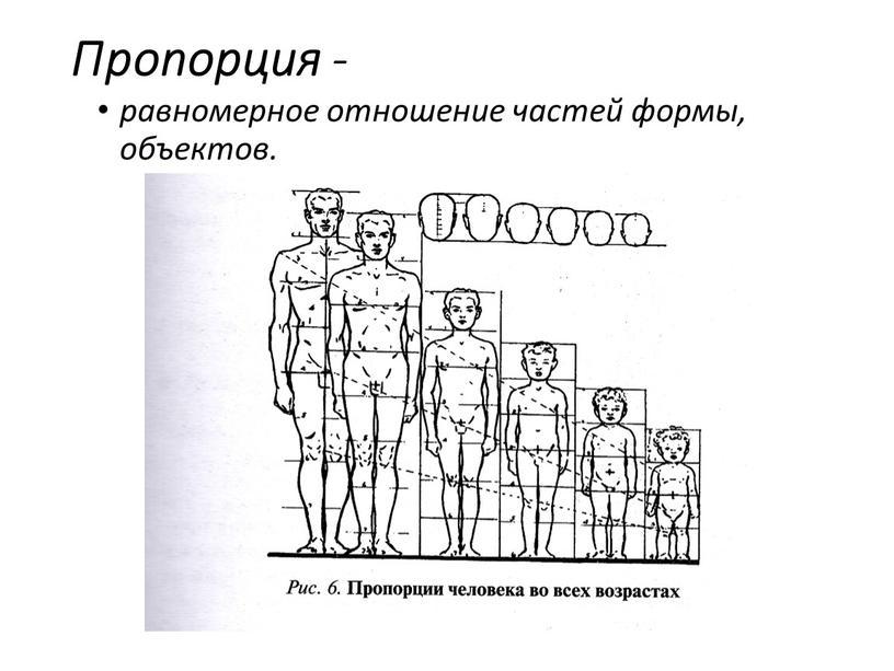 Пропорция - равномерное отношение частей формы, объектов