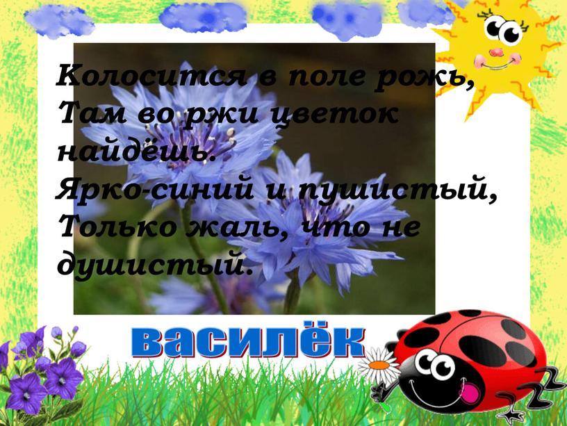 Колосится в поле рожь, Там во ржи цветок найдёшь