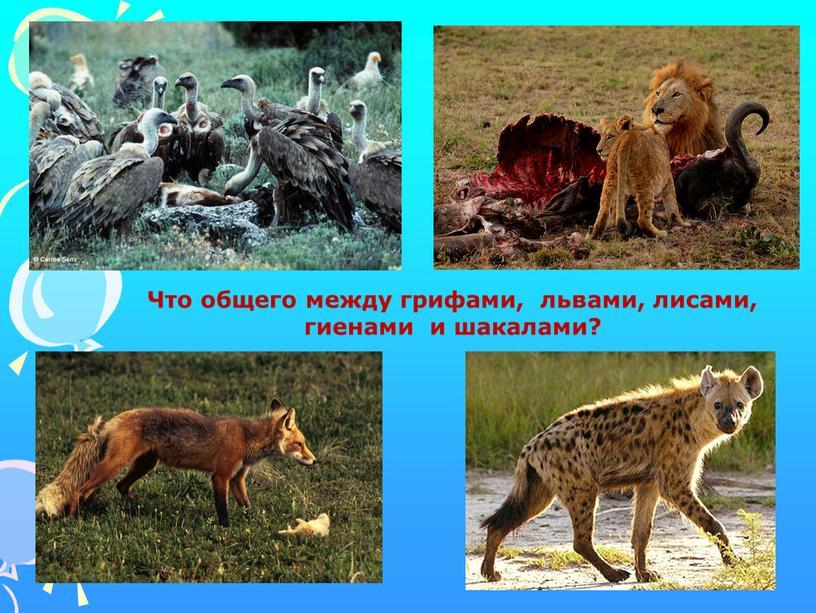 Что общего между грифами, львами, лисами, гиенами и шакалами?