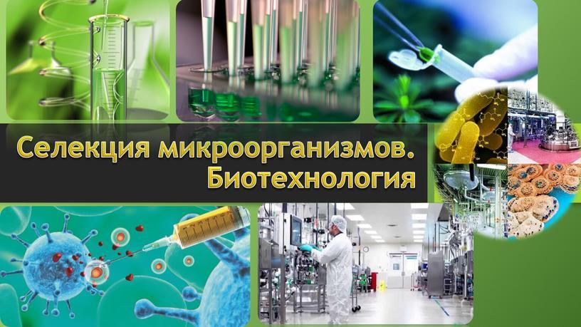 Селекция микроорганизмов. Биотехнология