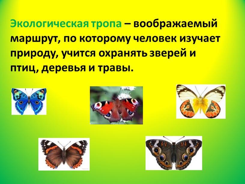 Экологическая тропа – воображаемый маршрут, по которому человек изучает природу, учится охранять зверей и птиц, деревья и травы