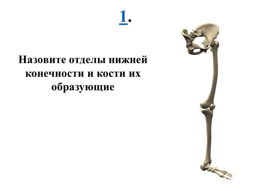 Назовите отделы нижней конечности и кости их образующие