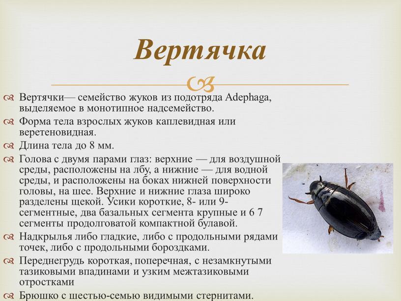 Вертячки— семейство жуков из подотряда