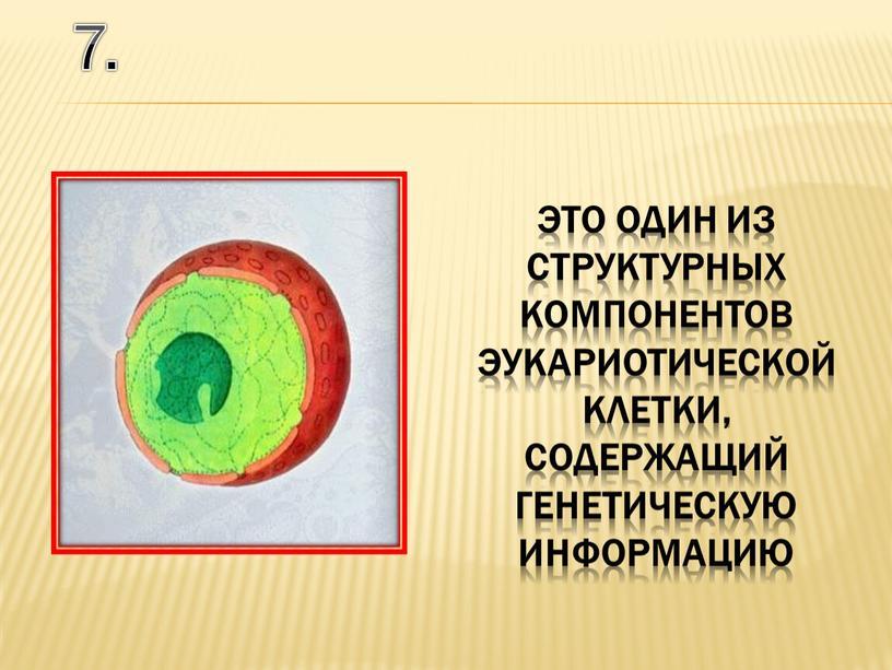 7. это один из структурных компонентов эукариотической клетки, содержащий генетическую информацию