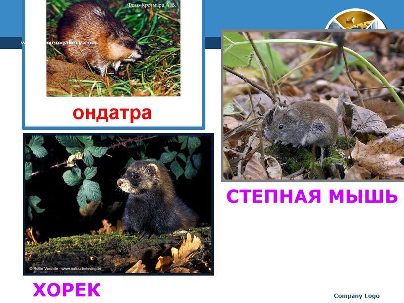Company Logo СТЕПНАЯ МЫШЬ ХОРЕК