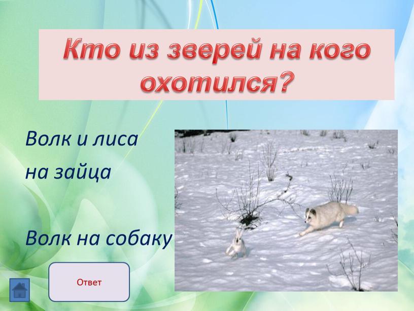 Волк и лиса на зайца Волк на собаку