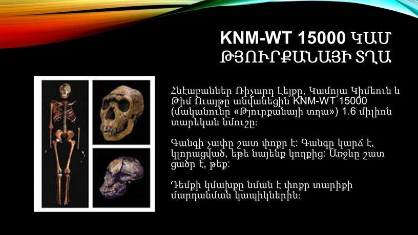 KNM-WT 15000 կամ Թյուրքանայի տղա Հնէաբաններ Ռիչարդ Լեյքը, Կամոյա Կիմեուն և Թիմ Ուայթը անվանեցին