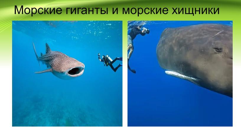 Морские гиганты и морские хищники