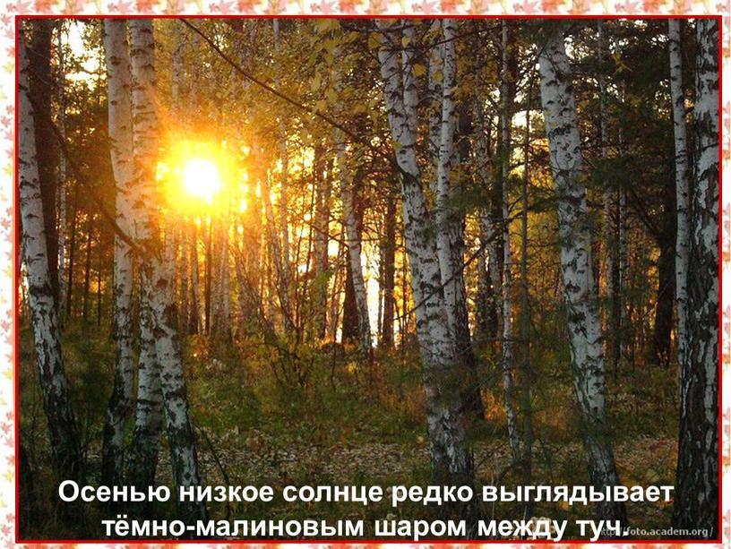 Осенью низкое солнце редко выглядывает тёмно-малиновым шаром между туч