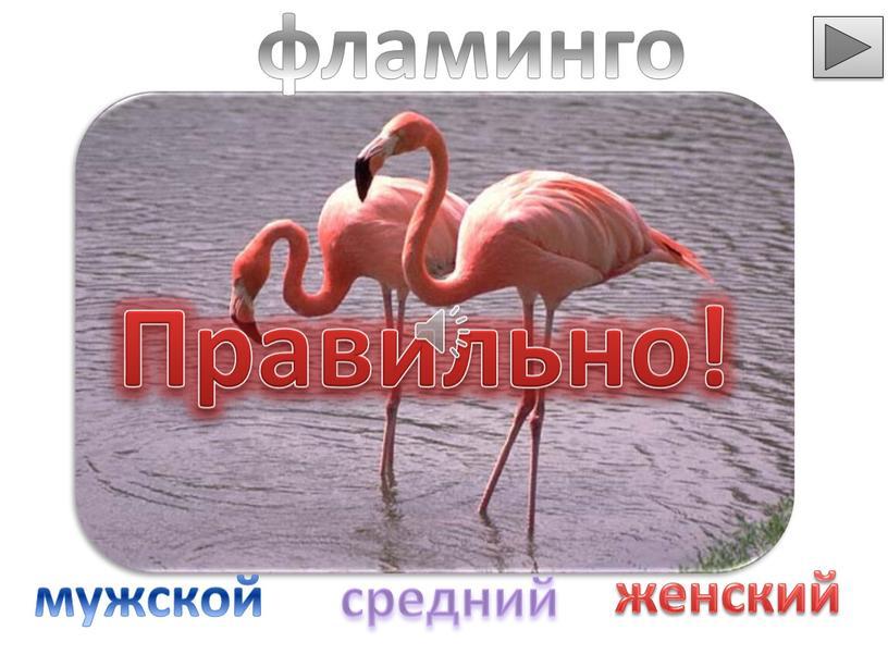 Правильно! фламинго мужской средний женский