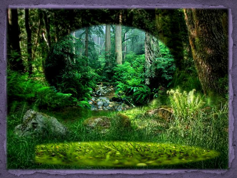 Лес – невидимка…