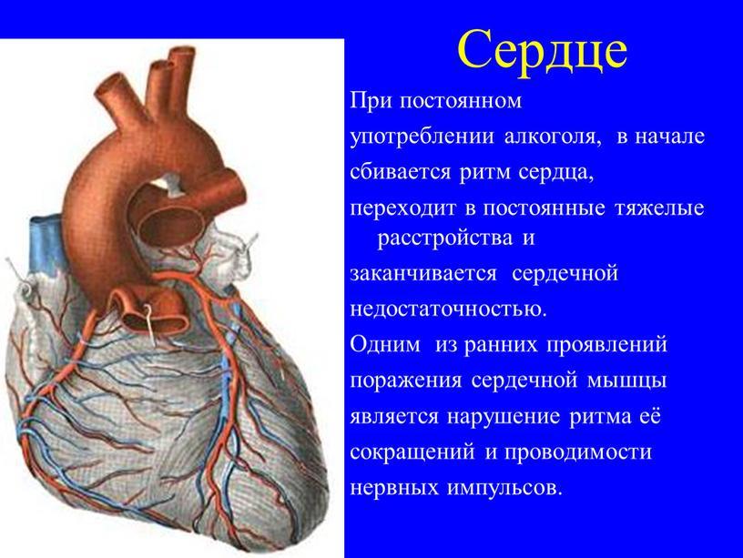 Сердце При постоянном употреблении алкоголя, в начале сбивается ритм сердца, переходит в постоянные тяжелые расстройства и заканчивается сердечной недостаточностью