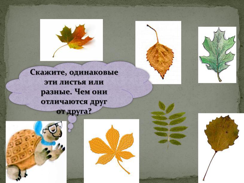 Скажите, одинаковые эти листья или разные