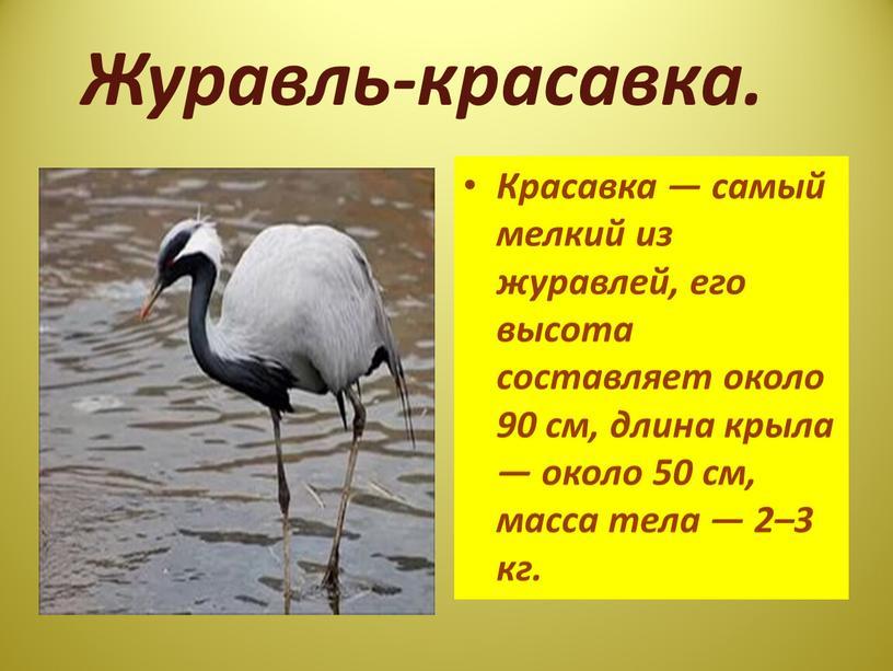 Журавль-красавка. Красавка — самый мелкий из журавлей, его высота составляет около 90 см, длина крыла — около 50 см, масса тела — 2–3 кг