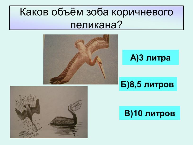 Каков объём зоба коричневого пеликана?
