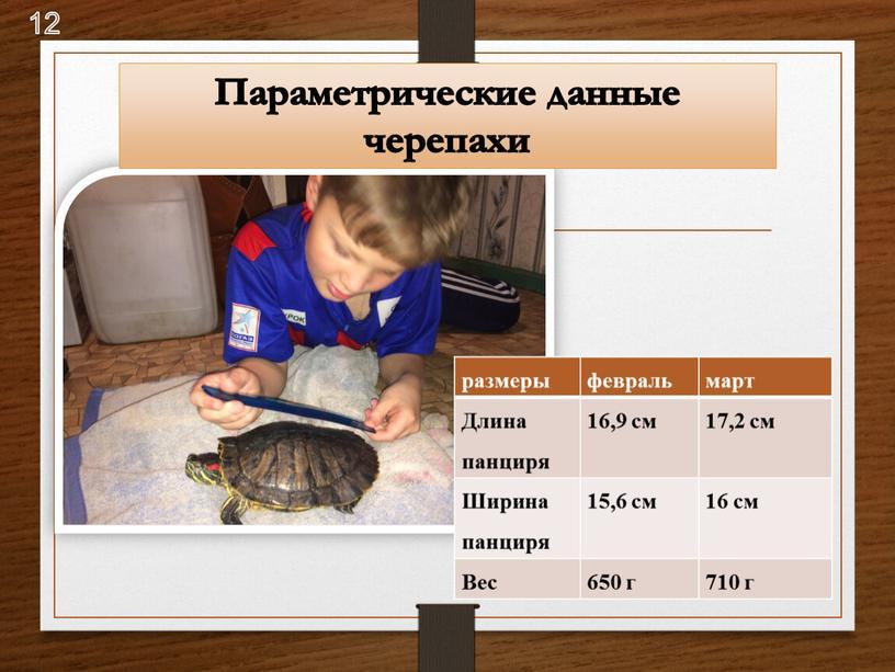 Длина панциря 16,9 см 17,2 см Ширина панциря 15,6 см 16 см