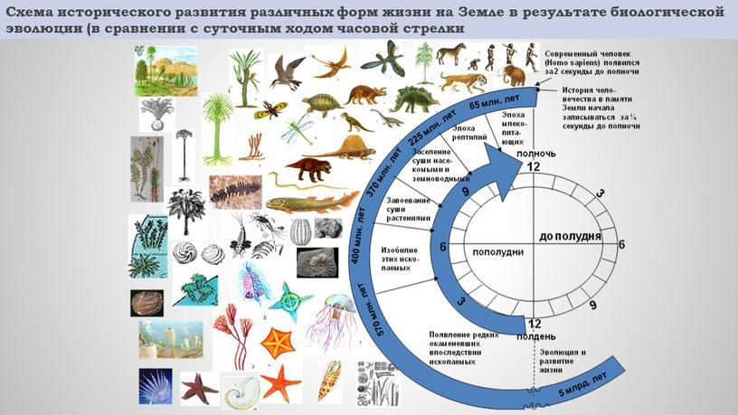 Схема исторического развития различных форм жизни на