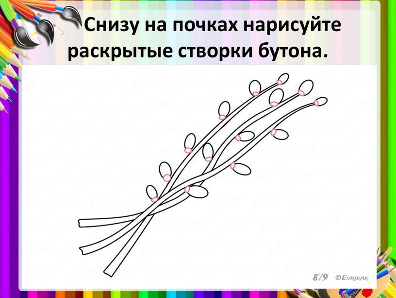 Снизу на почках нарисуйте раскрытые створки бутона