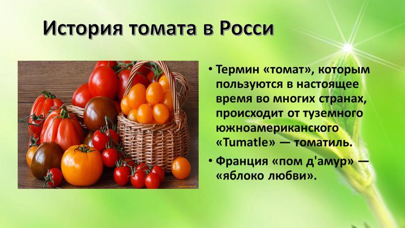Термин «томат», которым пользуются в настоящее время во многих странах, происходит от туземного южноамериканского «Tumatle» — томатиль