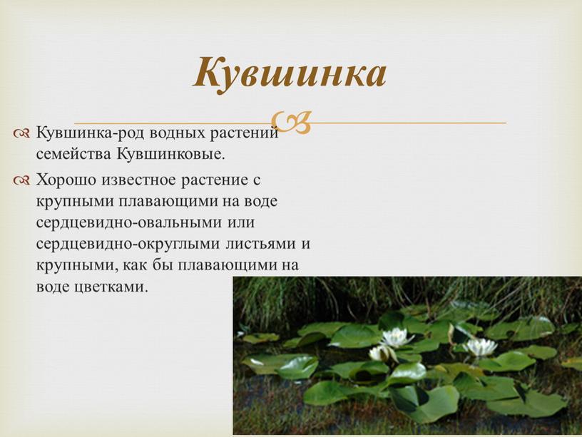 Кувшинка-род водных растений семейства