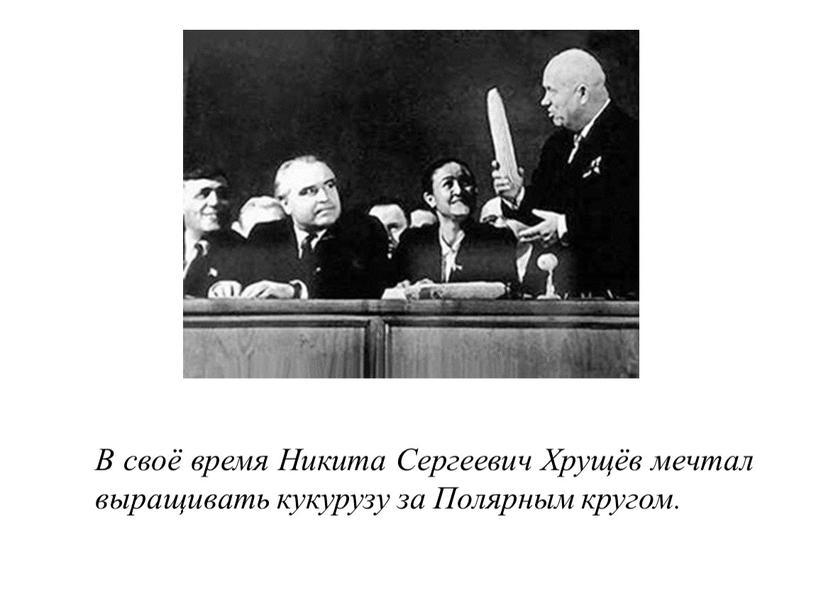 В своё время Никита Сергеевич Хрущёв мечтал выращивать кукурузу за
