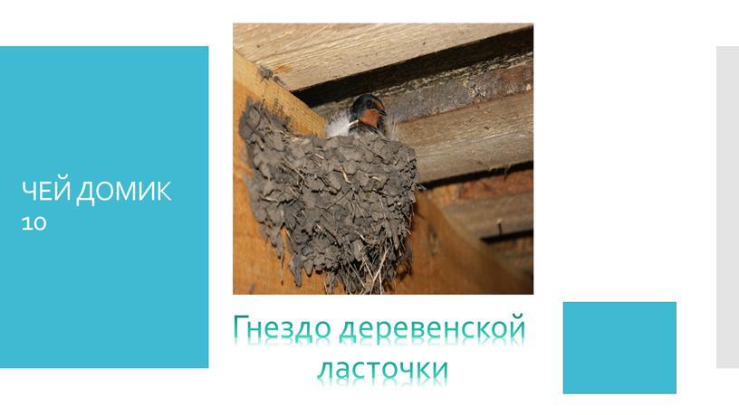 ЧЕЙ ДОМИК 10 Гнездо деревенской ласточки