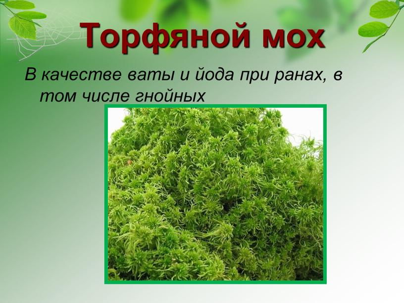 Торфяной мох В качестве ваты и йода при ранах, в том числе гнойных