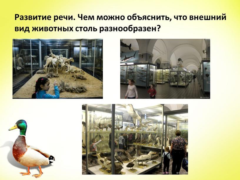 Развитие речи. Чем можно объяснить, что внешний вид животных столь разнообразен?