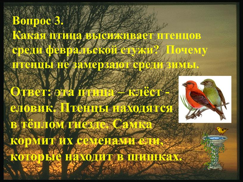 Вопрос 3. Какая птица высиживает птенцов среди февральской стужи?