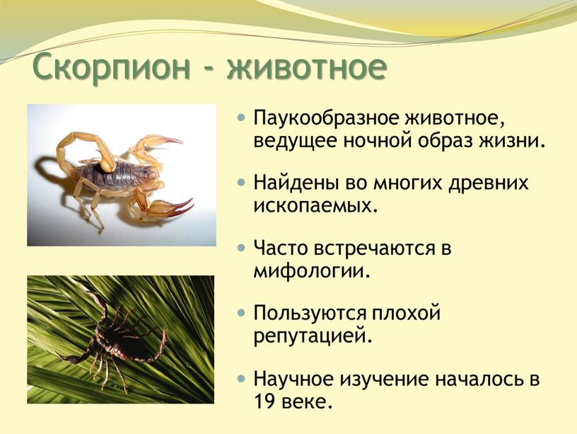Скорпион - животное Паукообразное животное, ведущее ночной образ жизни